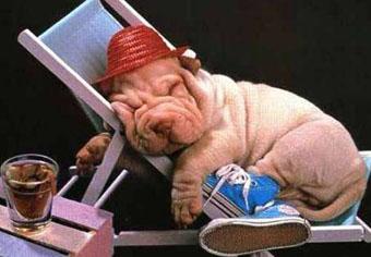 guarderia canina don perro:
